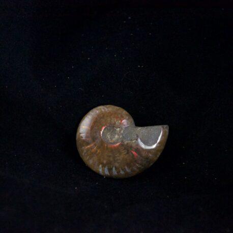 ammonitefs28mmx36mm12